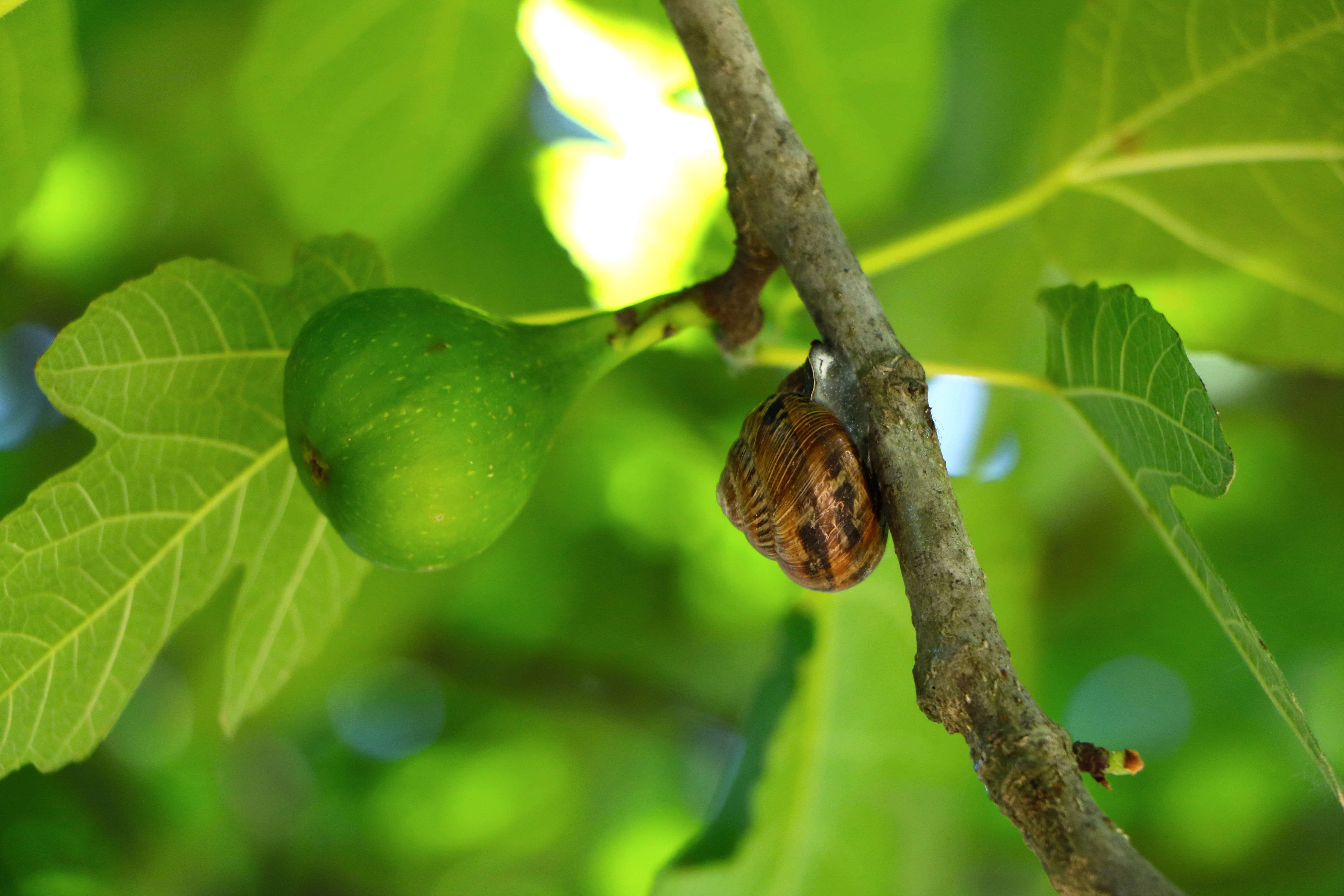 5 Methods of Drying Figs: A Complete Guide